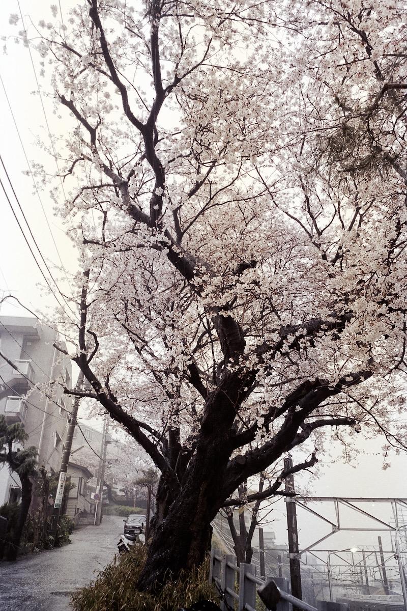 日々、横浜