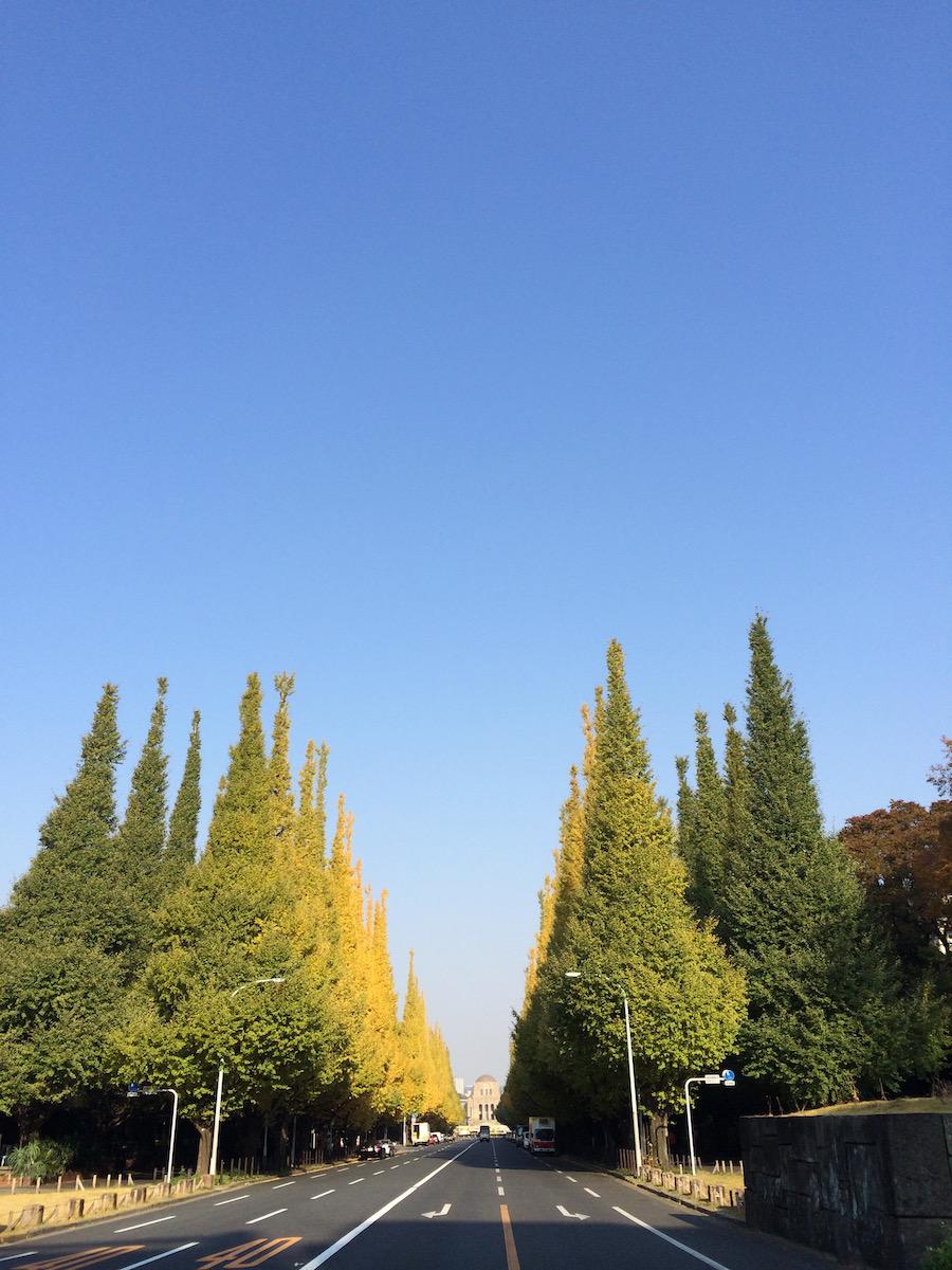 日々、11月、東京。
